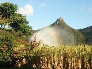 宿の裏に聳える野底岳、伝説の碑がある頂上まで最短15分で登れます